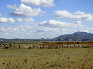 Masaii shepherds with their flocks along the shore of Lake Barunga.
