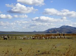 Masaii shepherds with their flocks along the shore of Lake Barunga.