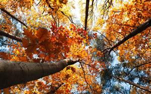 atumn leaf